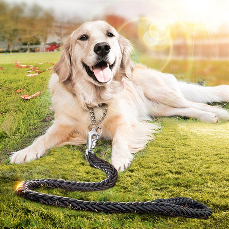 どのように列車のゴールデンレトリーバー犬を訓練する方法の金色の落ち着いた雰囲気の
