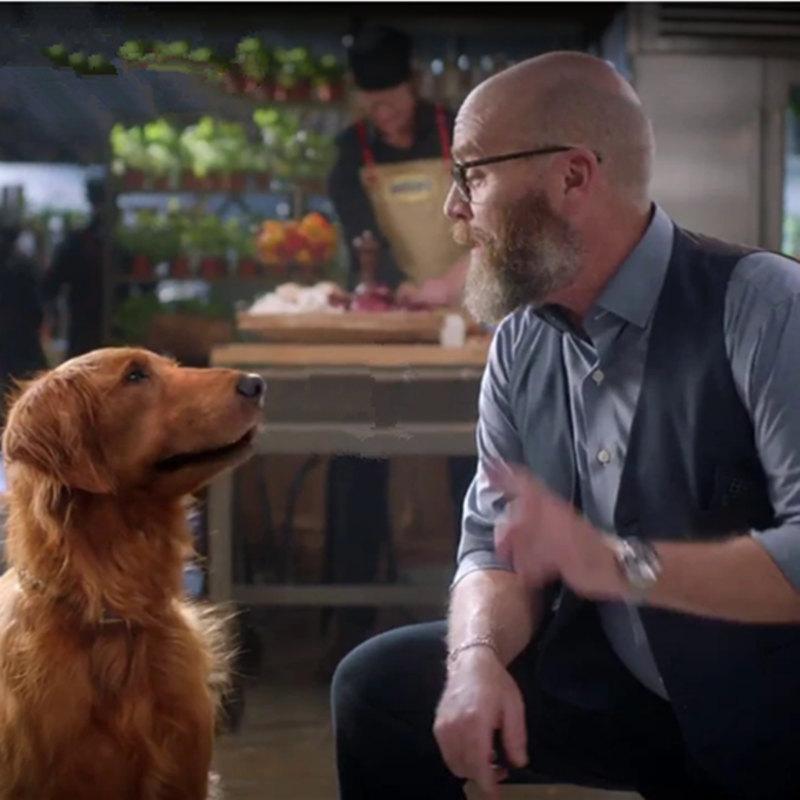 サムは、ブッシュのベイクドビーンズ犬、デュークを描いたが死亡した