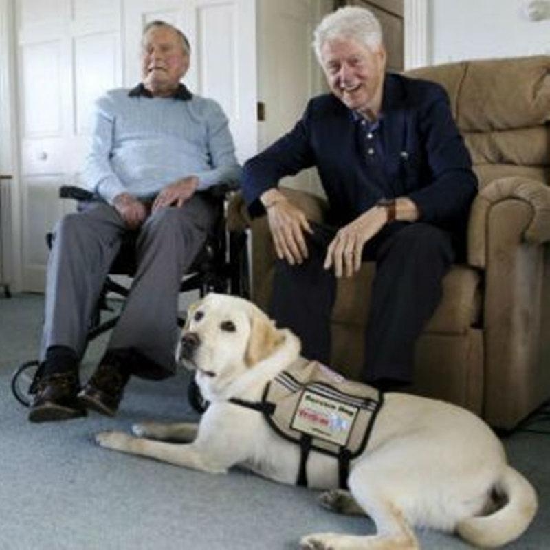 ブッシュ前大統領は、Kennebunkport合成物に新しいサービス犬を歓迎します