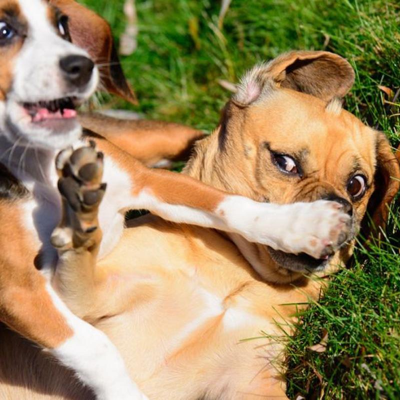 犬の犬はどのような薬を服用する必要がありますか?