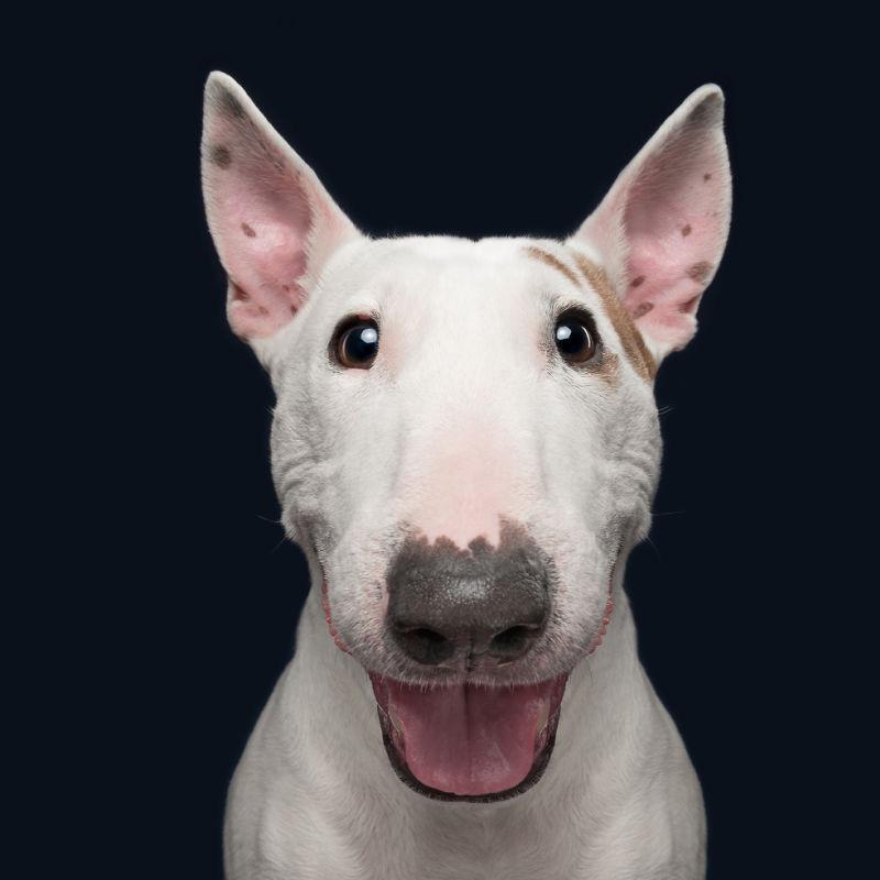 犬が聞こえなかったらどうしますか?犬をどうやって指示に従わせるのですか?